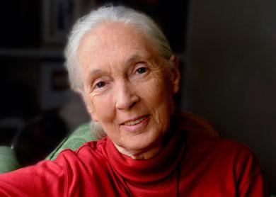 Jane Goodall - © Stuart Clarke
