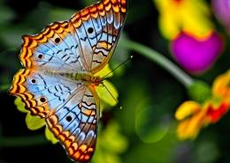 Biodiversity FPA 2010