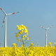 Windmühlen auf Feld