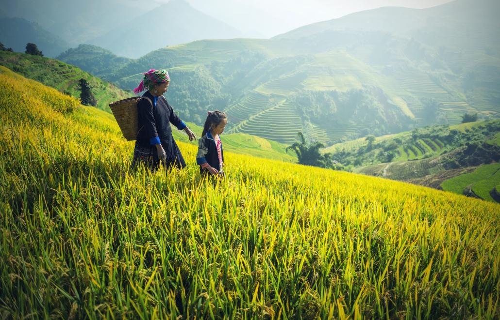 9e446c97d6d agriculture-1822446 by sasint via Pixabay