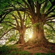 Gesunder Wald: Zusammenhang zwischen Coronavirus, industrieller Landwirtschaft und Biodiversität