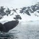 Protecting Oceans Antarctica