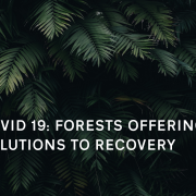 Forward Thinkers Webinar Forests recovery solutions